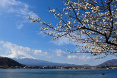 Mt.Fuji Royalty-vrije Stock Afbeelding