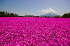 Mt Fuji Fotografie Stock Libere da Diritti