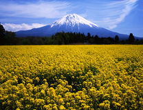 Mt fuji-324 Stock Photos