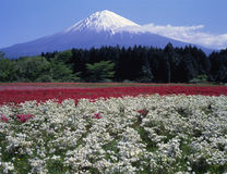 Mt fuji-374 Stock Photos
