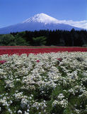 Mt fuji-375 Stock Photos