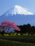 Mt fuji-378 Stockbild