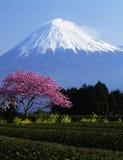 MT fuji-378 Stock Afbeelding