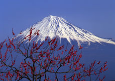 Mt fuji-386. Mount Fuji with red apricot blossoms Stock Images