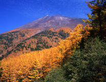 Mt fuji-387 Royalty Free Stock Images
