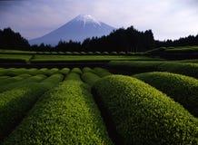 Mt fuji-406. Luscious green tea fields at the foot of Mt. Fuji Stock Photos