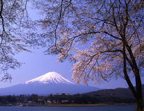 Mt fuji-417. Lakeside view of Mount Fuji in Spring with cherry blossoms Royalty Free Stock Image