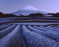 Mt fuji-423. Snow green tea fields at the foot of Mt. Fuji Stock Photos