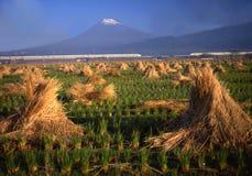 Mt fuji-424 Stock Image