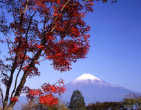 Mt fuji-425. Beautiful Fall colors overlooking Mount Fuji Stock Photo