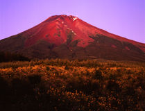 Mt fuji-428 Stock Photos