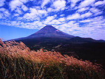 Mt fuji-432. Clouds over Mt Fuji peak and Japanese pampas grass Royalty Free Stock Photos