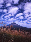 Mt fuji-433. Scale clouds over Mt,Fuji peak and swing Japanese pampas grass-2 Royalty Free Stock Image