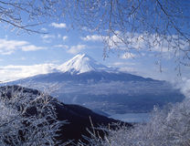 Mt fuji-436. View Mt,Fuji from ice coating on the trees at mount peak Royalty Free Stock Photography