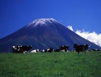 Mt fuji-437 Imagem de Stock