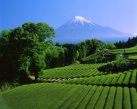 Mt fuji-443 stock photo