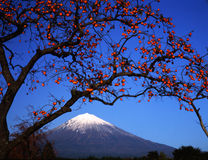 Mt fuji-449 Royalty Free Stock Photos