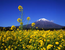 Mt fuji-453 Stock Photo