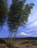 Mt fuji. The Mt,Fuji view from bamboo woods in winter Stock Image