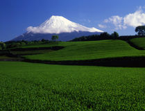 Mt fuji Royalty Free Stock Photos