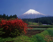 Mt fuji-460. Japanese rural districts scene in springtime and Mt,Fuji Royalty Free Stock Photo