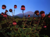 Mt fuji-469 Stock Photo