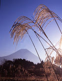Mt fuji-482. The Mt,Fuji in early autumn and Japanese pampas grass Stock Photos