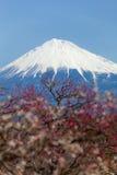 Mt fuji Royaltyfri Fotografi