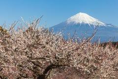 Mt fuji Royaltyfri Bild