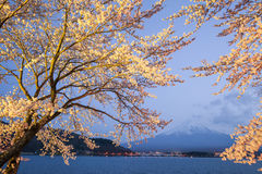 Mt fuji Royaltyfri Foto