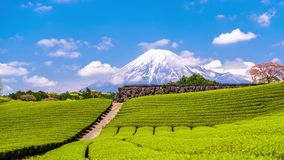 Mt. Fuji And Tea Fields Royalty Free Stock Photography