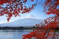Mt. Fuji in the Autumn Royalty Free Stock Image