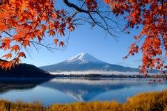 Mt.Fuji and autumn foliage at Lake Kawaguchi. Japan Royalty Free Stock Photography
