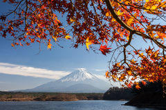 Mt. Fuji in autumn. And maple leaves view from Saiko lake Stock Photo