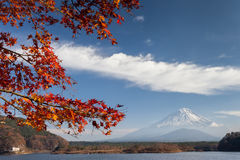 Mt. Fuji in autumn. And maple leaves view from Saiko lake Stock Photography