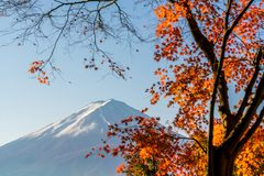 Mt. Fuji in autumn with red maple leaves. At Kawaguchigo lake Japan stock images