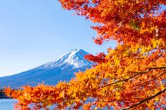 Mt.fuji in autumn royalty free stock image