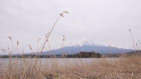 Mt Fuji avec les fleurs de cerisier et l'herbe jaune dans un jour nuageux Un paysage au Japon avec sa montagne remarquable photographie stock