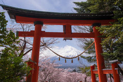 Mt Fuji avec les fleurs de cerisier et l'herbe jaune dans un jour nuageux Un paysage au Japon avec sa montagne remarquable photos libres de droits