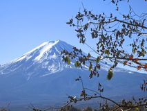 Mt. Fuji With Berries Royalty Free Stock Photography