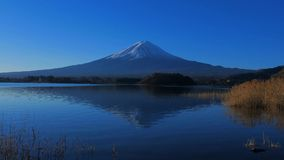 Mt.Fuji with blue sky from Oishi Park in Lake Kawaguchi Japan stock video footage