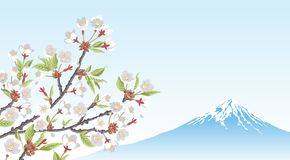 Mt.Fuji and Cherry Blossom branch Royalty Free Stock Photography