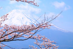 Mt Fuji and Cherry Blossom  in Japan Spring Season (Japanese Cal. L Sakura ) Selective Focus Royalty Free Stock Photo