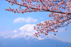 Mt Fuji and Cherry Blossom  in Japan Spring Season (Japanese Cal Stock Photo