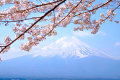 Mt Fuji and Cherry Blossom  in Japan Spring Season  Stock Photography