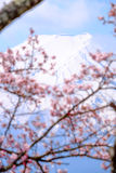 Mt Fuji and Cherry Blossom  in Japan Spring Season & x28;Japanese Cal Stock Image