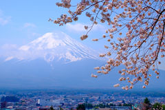 Mt Fuji and Cherry Blossom  in Japan Spring Season & x28;Japanese Cal Stock Photography