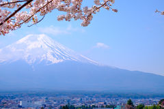 Mt Fuji and Cherry Blossom  in Japan Spring Season & x28;Japanese Cal Stock Photo