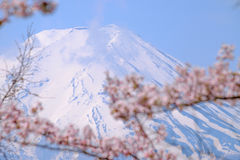 Mt Fuji and Cherry Blossom  in Japan Spring Season & x28;Japanese Cal Royalty Free Stock Images