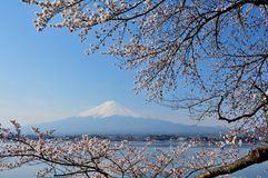 Mt Fuji and Cherry Blossom Stock Photography